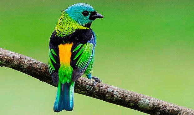 Sete cores da amazônia