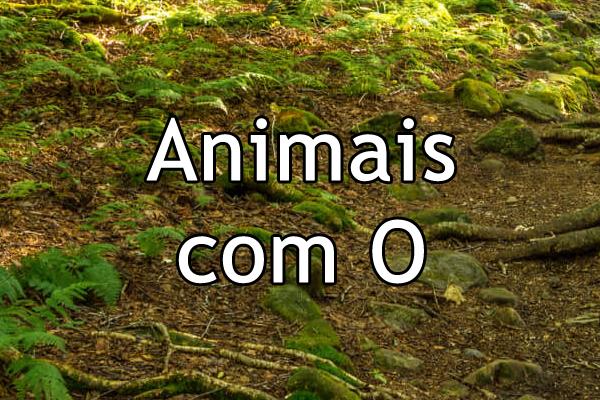 Animais com O