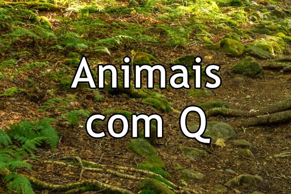 Animais com Q
