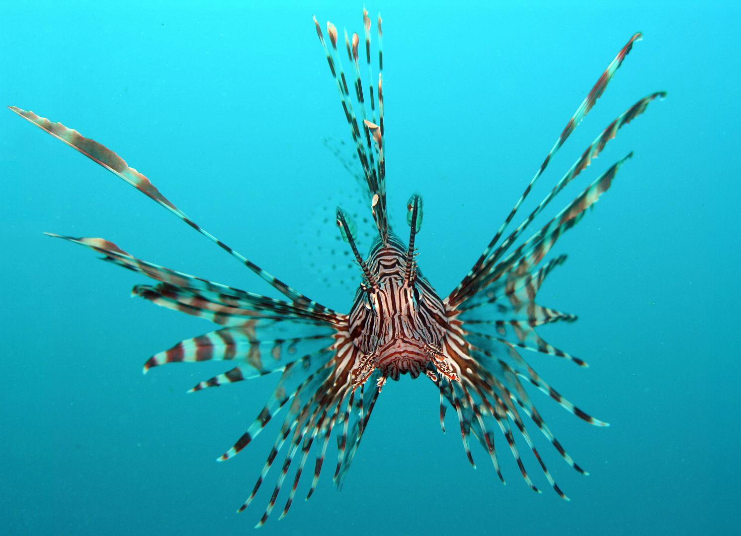 Dragão peixe