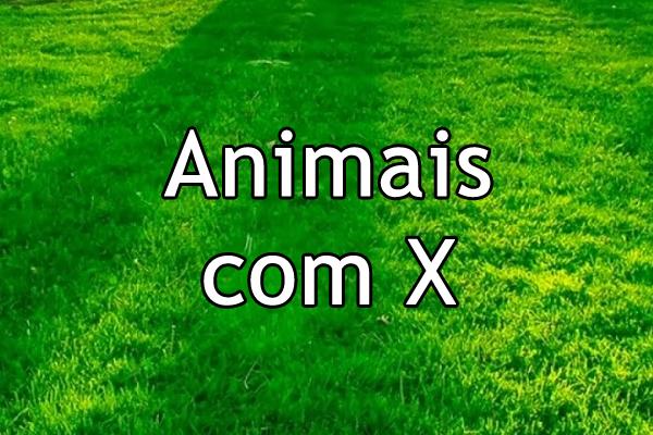 Animais com X