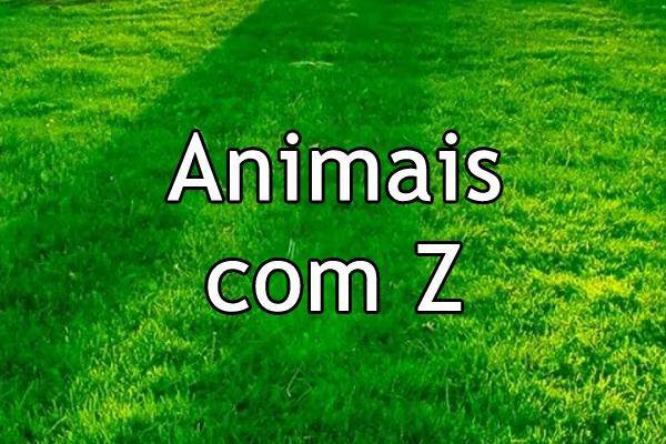 Animais com Z