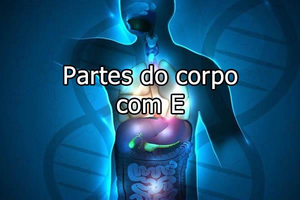 Partes do corpo com E
