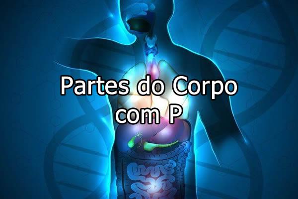 Partes do Corpo com P