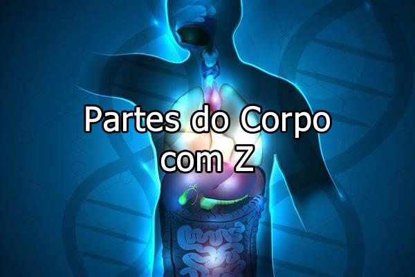 Partes do corpo com Z